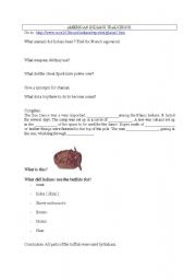 English Worksheet: American Indians