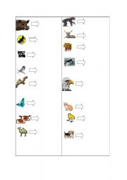 English Worksheets: animals and transportation