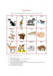 English Worksheet: Animal Kingdom - Mammals