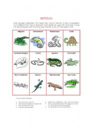 English Worksheet: Animal Kingdom - Reptiles