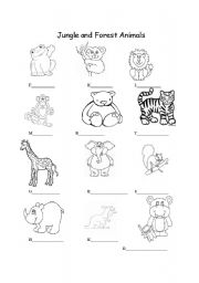 English Worksheet: Jungle and Forest Animals