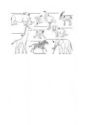 English Worksheets: african animal