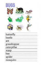 English Worksheets: BUGS