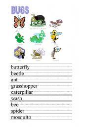 English Worksheet: BUGS