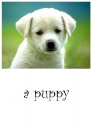 English Worksheets: a puppy