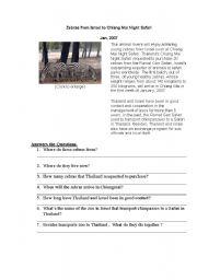 English Worksheets: Chiangmai Night zafari