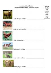 English Worksheets: Young animals