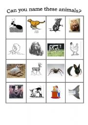English Worksheets: wild and domestic animals