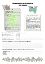 English Worksheets: The Koala