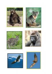 English Worksheets: ANIMAL FLASCARDS