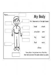 English Worksheets: my.body