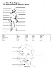 English Worksheets: label the body