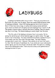 English Worksheet: Ladybug comprehension and quiz