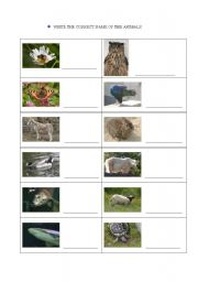 English Worksheets: Which are there animals?