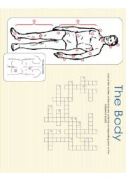 English Worksheet: The Body - Crossword Puzzle