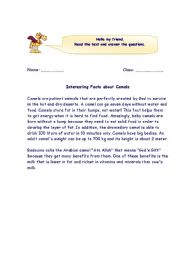 English Worksheets: Facts about Camels