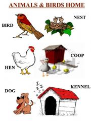 Home gt animals powerpoint lessons gt animals and birds home