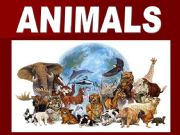 English powerpoint: ANIMALS