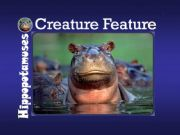 English powerpoint: HIPPOPOTAMUSES