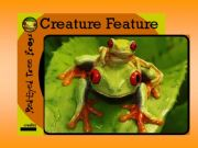 English powerpoint: RED FROGS