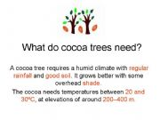 English powerpoint: Cocoa trees