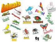 English powerpoint: Animals