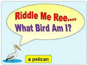 English powerpoint: Bird Riddles