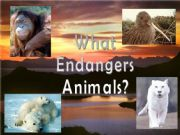 English powerpoint: What endangers animals?