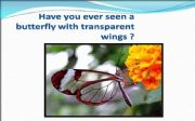 English powerpoint: Transparent Butterfly