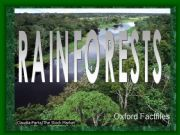 English powerpoint: Rainforests