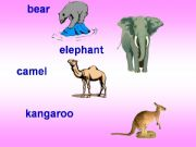 English powerpoint: Animal Homes