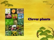 English powerpoint: CLEVER PLANTS