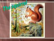 English powerpoint: THE SQUIRREL