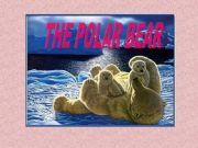 English powerpoint: The polar bear