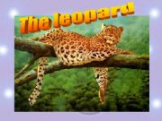 English powerpoint: the leopard