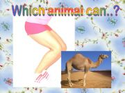 English powerpoint: What can these animals do?