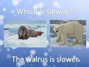 English powerpoint: Arctic Animals Comparison 2