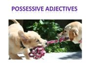 English powerpoint: Possessive adjectives I