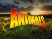 English powerpoint: Animals Vocabulary