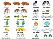 English powerpoint: Can you name these pets?