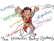 English powerpoint: Human Body Systems Review