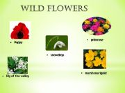 English powerpoint: Flowers / Gardening