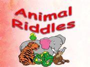 English powerpoint: animals riddles