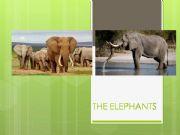 English powerpoint: Edangered animals
