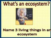 English powerpoint: LEVEL OF ECOSYSTEM