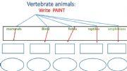English powerpoint: vertebrate animals examples