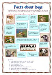 English Worksheets: Facts about dogs
