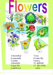 English Worksheet: Flowers (Picture Dictionary) 2.08.08