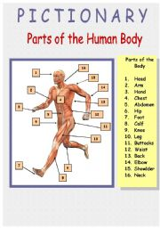 English Worksheets: Human Body (Inside and Outside) (4/4) Pictionary