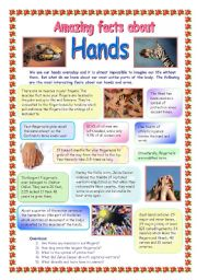 English Worksheets: Amazing facts about hands